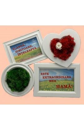 Tablou Pentru Mama Cu Licheni Stabilizati si Mini-roza stabilizata